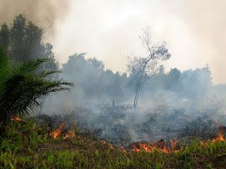 Indonesia Siap Hadapi Karhutla di Puncak Musim Kemarau 2021