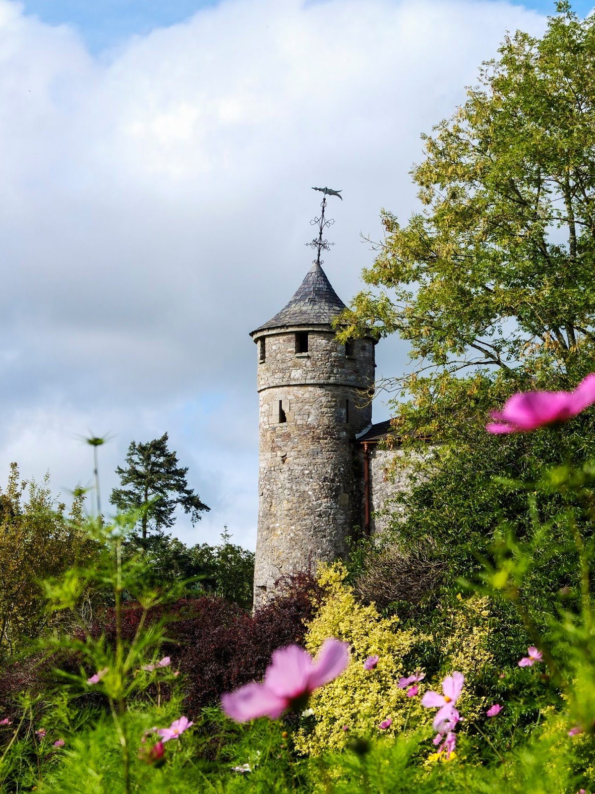 A stone corner tower of the Cahir Castle in Co.Tipperary with pink cosmos flowers in the foreground.