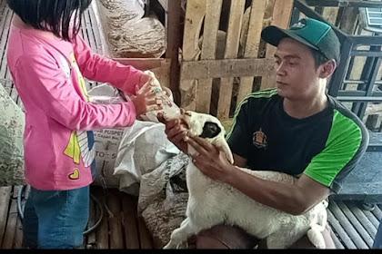 Takaran Susu Untuk Anak Kambing
