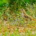 Passage Migratory Birds to Gujarat