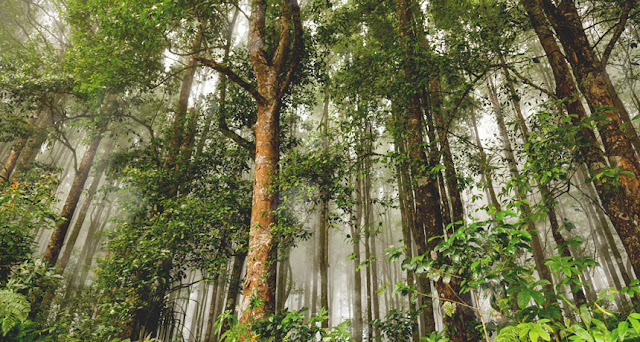 Jenis-jenis Hutan di Indonesia Beserta Penjelasannya