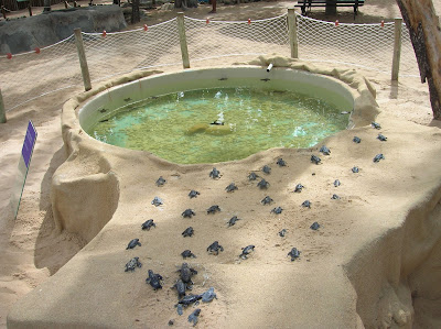 Eclosión tortugas, Proyecto Tamar, Praia do Forte, Brasil, La vuelta al mundo de Asun y Ricardo, round the world, mundoporlibre.com