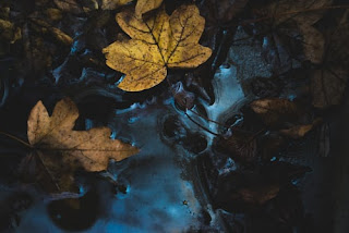 Alone Leaf image abegi mon image download