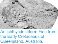 https://sciencythoughts.blogspot.com/2013/09/an-ichthyodectiform-fish-from-early.html