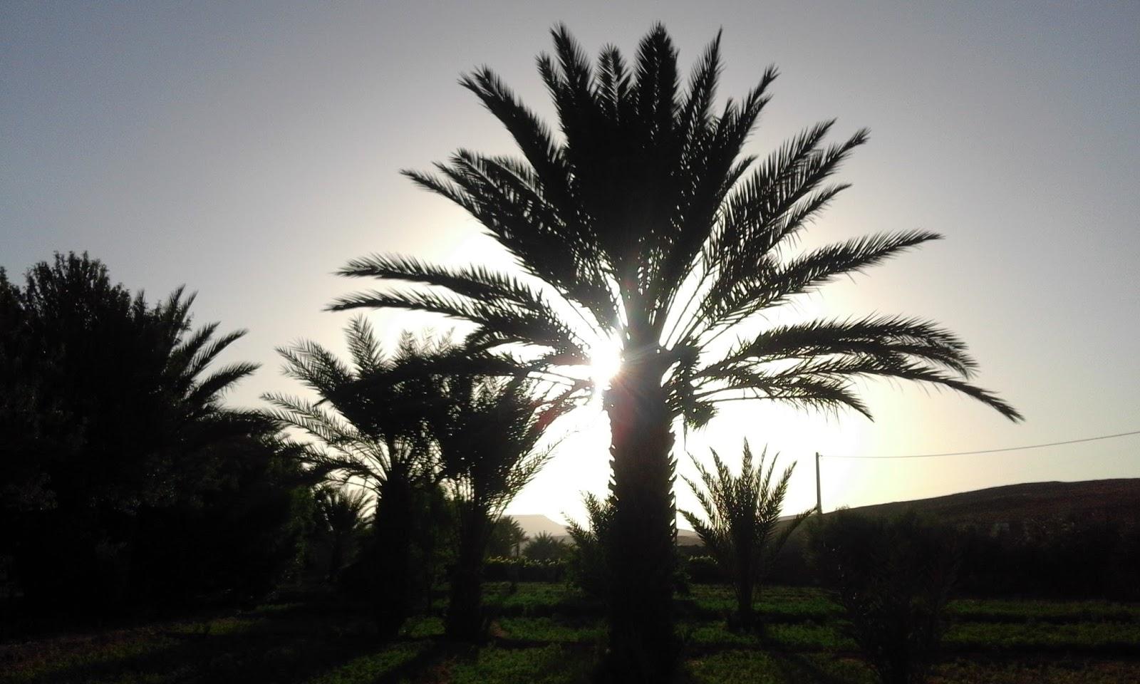 todaysouhaila.blogspot.com