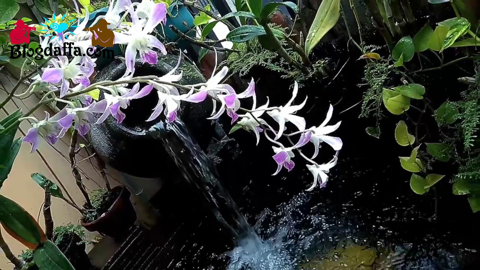 Dekatkan Anggrek dengan Sumber Air