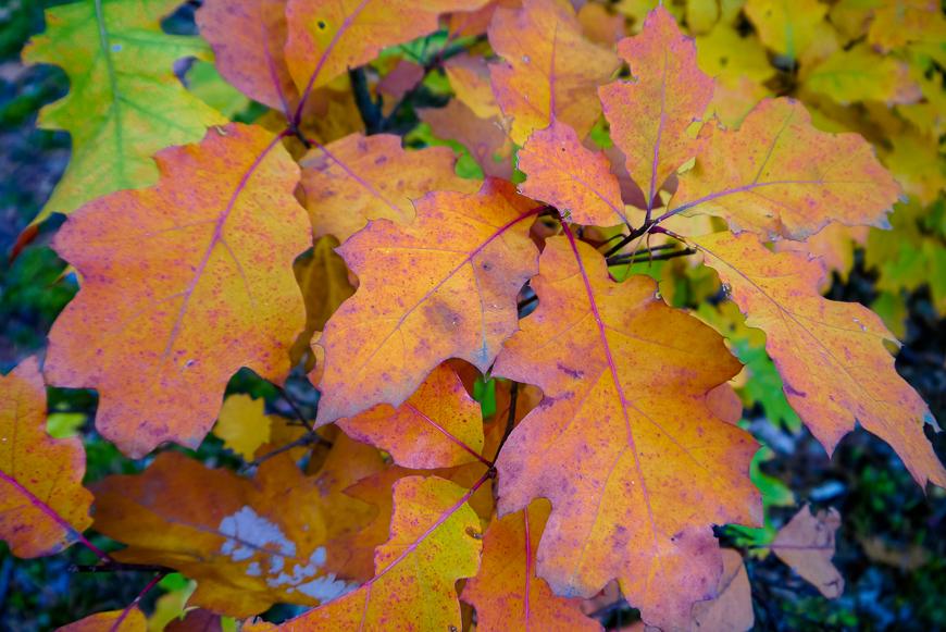 jesień w Kampinosie