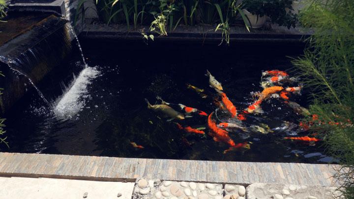 water-garden-fish-tank