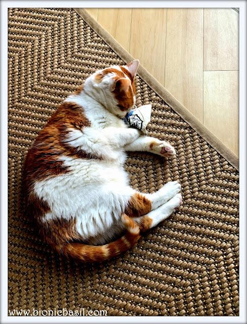 Amber vs The Catnip Teabag ©BionicBasil® The Pet Parade 330
