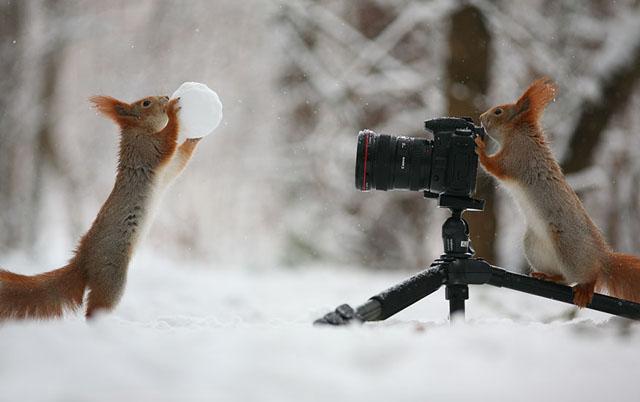 Sevimli Sincap Fotoğrafları