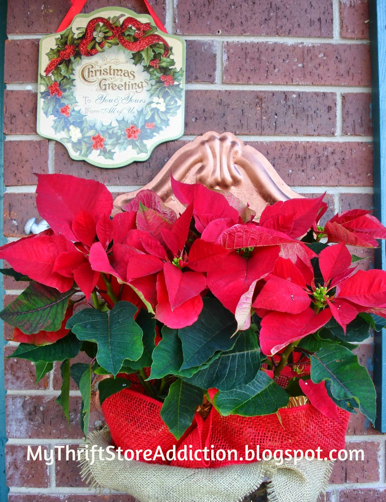 Repurpose fountains for poinsettias