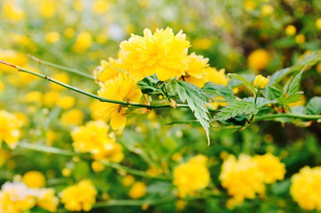 Garten, Pflanze im Grünen ©misspaperback
