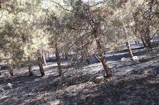 بێگهرد تاڵهبانی: چەندینجار هۆشداریمان دابوو لە سوتانی دارستانی گۆیژە