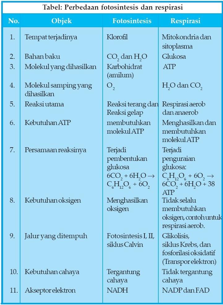 info for 7a4b2 39924 Laporan fotosintesis dan respirasi tumbuhan