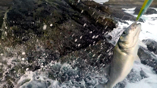 ESPUMA - Pasión por la pesca de la robaliza 🎣🐟🐟🐟