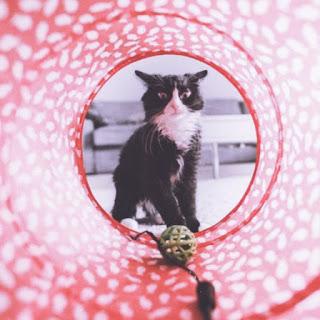 cute cat whatsapp dp images