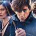 """Dan Fogler aborda os rumores de que mais personagens de """"Harry Potter"""" poderão aparecer em """"Animais Fantásticos 3"""""""