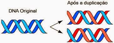 DNA e sua duplicação