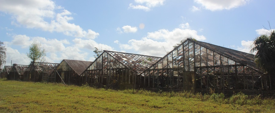 Granjas abandonadas en la orilla norte del Lago Apopka