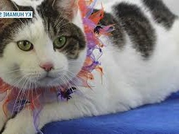 National Cat Day: Why you ought to adopt