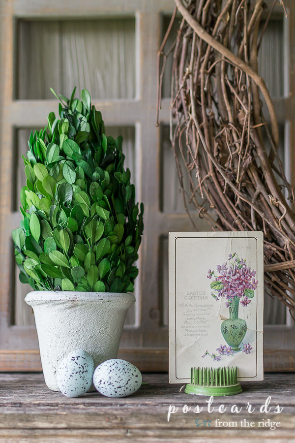 preserved boxwood topiary and ceramic robin eggs with vintage Easter postcard