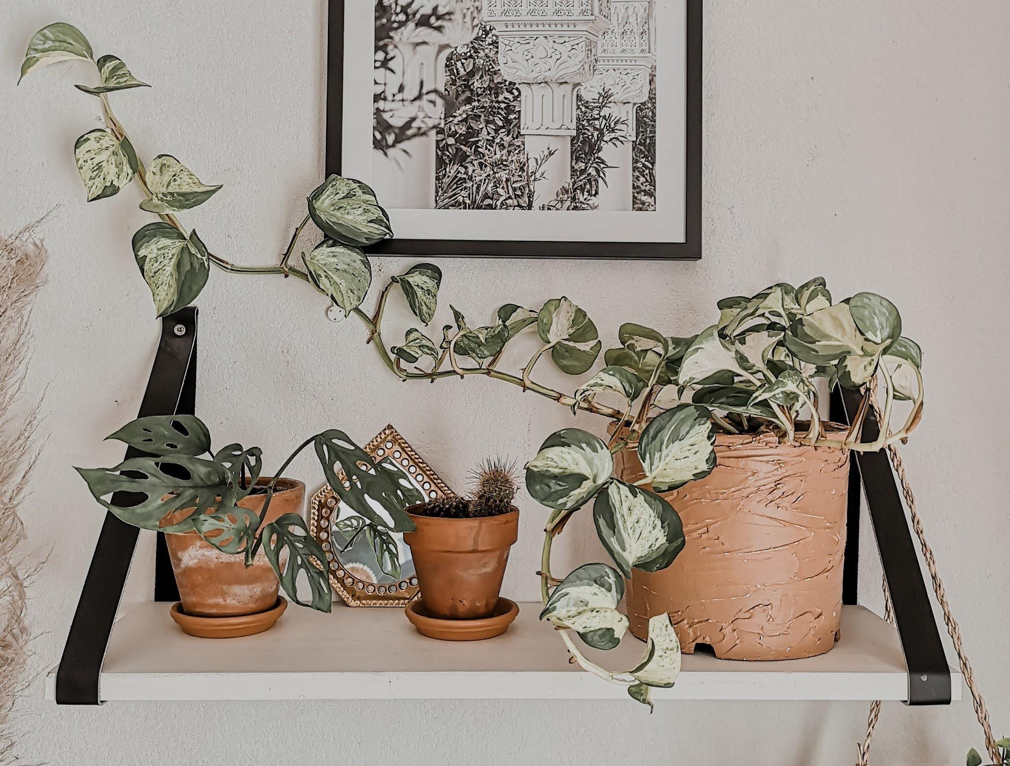 diy-pot-de-fleurs-terre-cuite-peinture-texturée