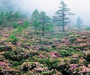 Hutan Alami Paling Indah di Dunia