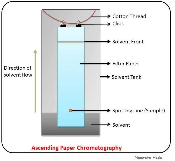 paper chromatography Paper chromatography is an ancient technique to separate low molecular mass  compounds based on their distribution between mobile phase (solvent) and.
