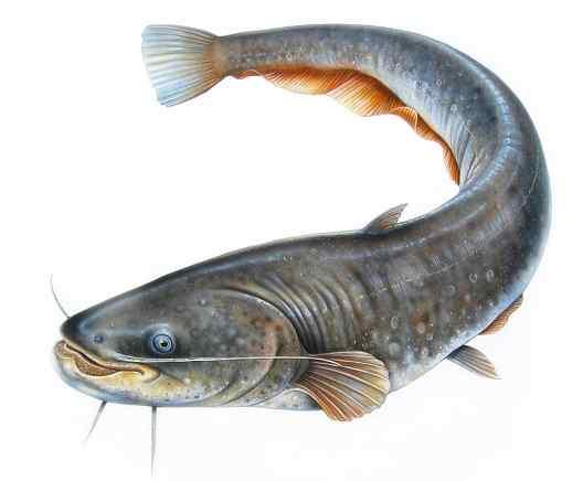Cara Jitu Bisnis Ikan Lele Terpal dengan Cara Mudah