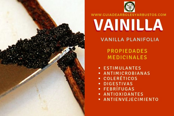 las Propiedades medicinales de la Vainilla son: estimulantes, antimicrobianas, digestivas entre otras