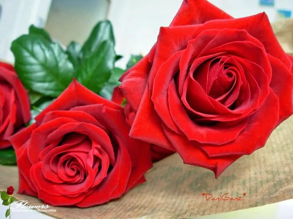 صورة وردة حلوة جميلة 5
