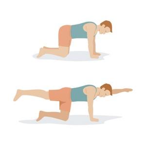 Quadraplex для тренування рівноваги, сидниць, спини