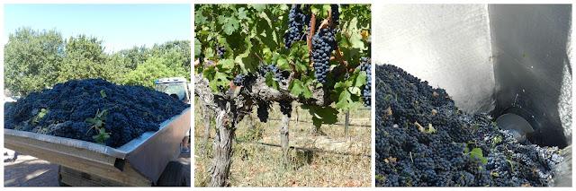 Degustação de vinho na vinícola Meerlust (Stellenbosch), África do Sul