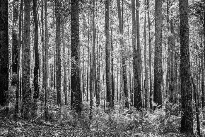 aussie forest