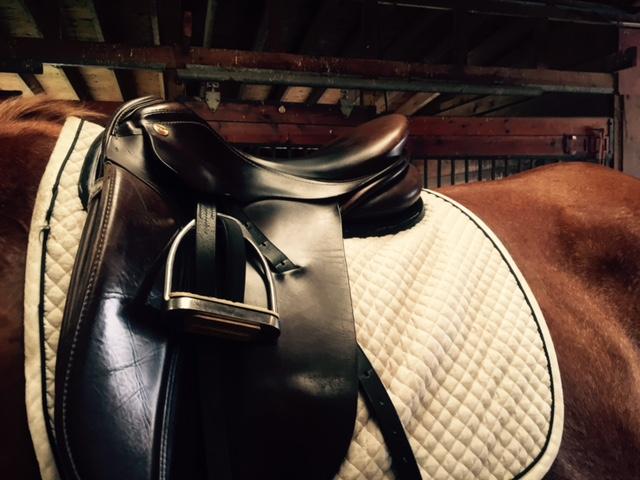 Kavallerie Gel Half Pad Review | Savvy Horsewoman