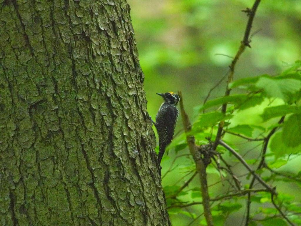 صور من غابة بياوفيجا