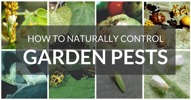 How To Naturally Control Garden Pests
