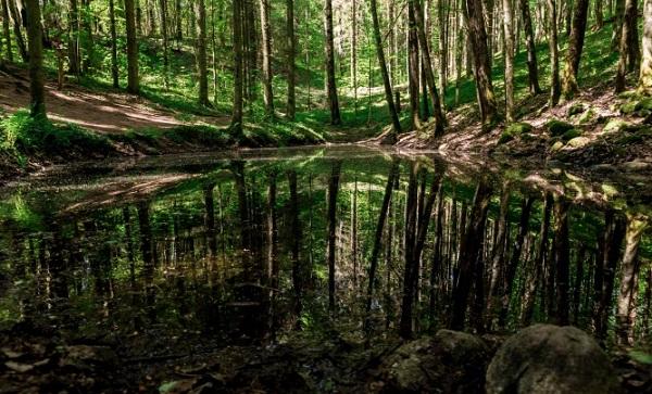 The Mysterious Pokaini Forest of Latvia