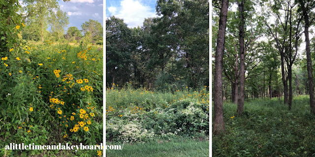 Summer at Old School Forest Preserve in Mettawa, IL is full of life and nature adventures!