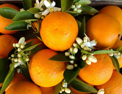 Manfaat Air Bunga Jeruk Untuk Kecantikan Kulit