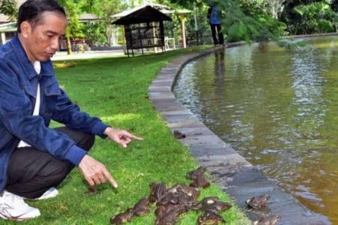 Megawati dan kodok