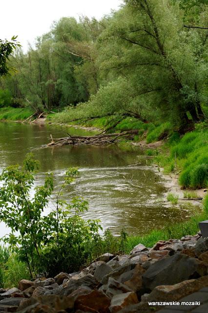 Wisła Warszawa Warsaw Bielany Młociny teren zielony parki drzewa las brzeg bobry