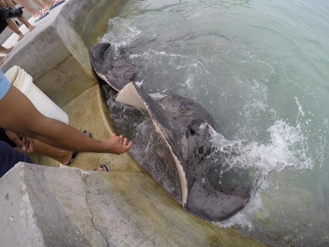 razza acquatica maldive