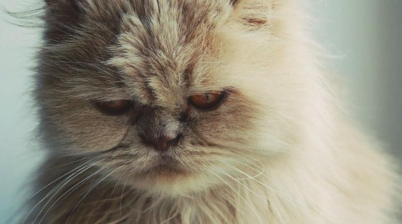 gato com a cara amarrada com se estivesse aborrecido