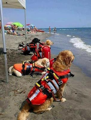 Lifeguard Doggos In Croatia