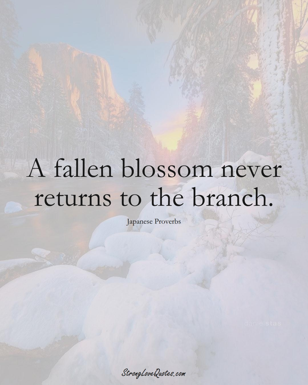 A fallen blossom never returns to the branch. (Japanese Sayings);  #AsianSayings