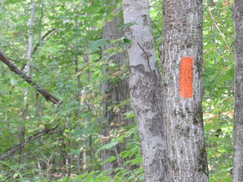 orange blaze on tree