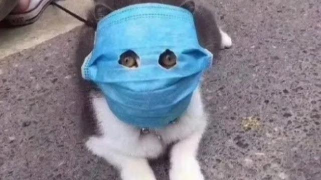 Kucing Peliharaan Jadi Hewan Kedua yang Positif Terkena Virus Corona