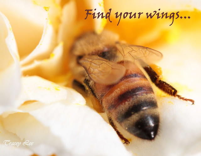find your wings quote