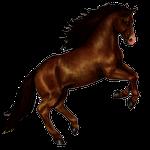 horse in spanish, farm animals in Spanish